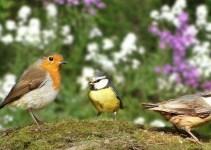 Birds in Garden