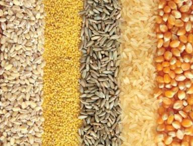 What Do Sheep Eat: Grains