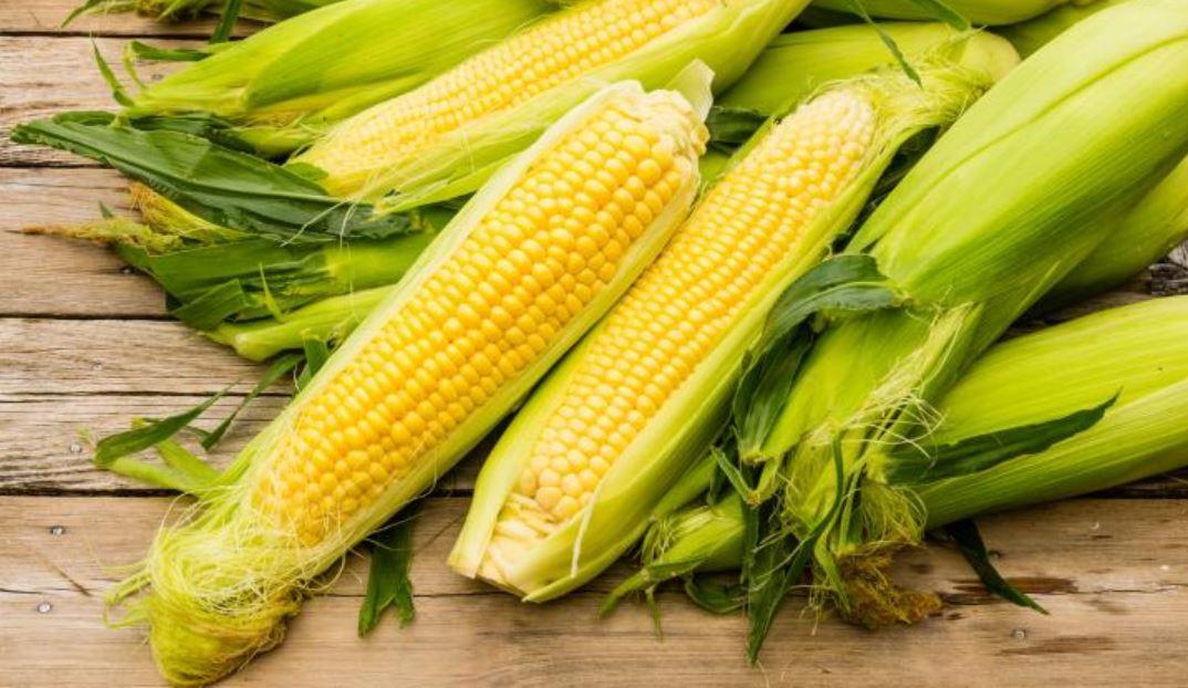 Can Rabbits Eat Corn