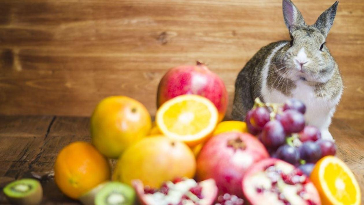 Fruits Rabbits Can Eat