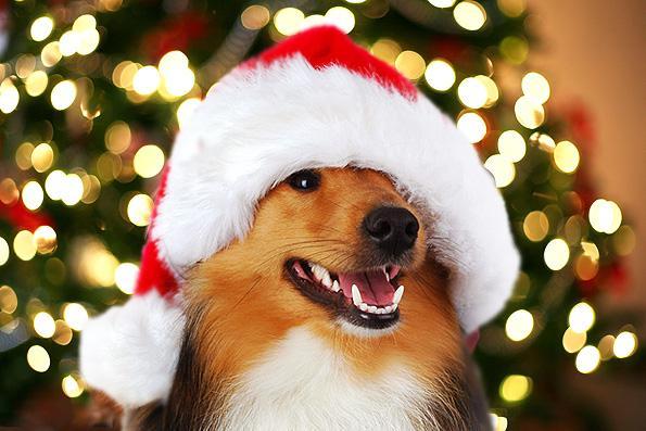Christmas At Hairy Dog Salon Hairy Dog Grooming Salon