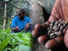 Haïti - Agriculture : La Colombie va aider les producteurs de café haïtien