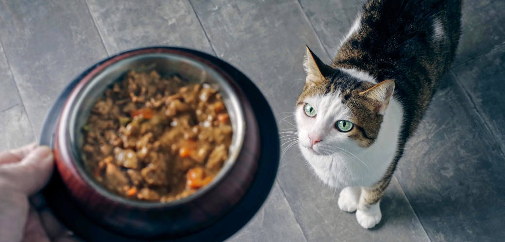 There Might Be Shark in Your Pet's Food | Hakai Magazine