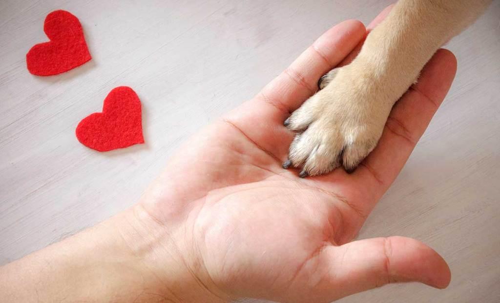 Enamorado de las mascotas