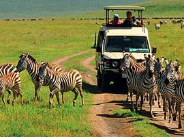 8-Day Epic Tanzania Experience