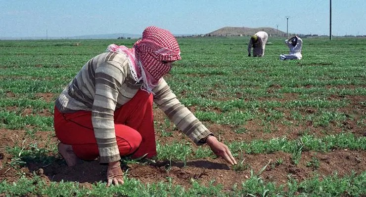 agriculture-in-syria