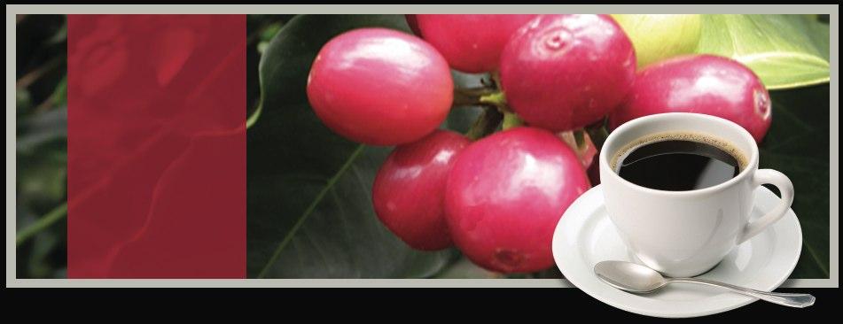 Image Result For Hualalai Coffee Company