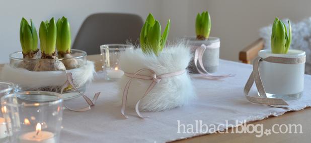 DIY-Idee halbachblog: erster Frühling mit Hyazinthen mit Fellhülle und Bandschmuck