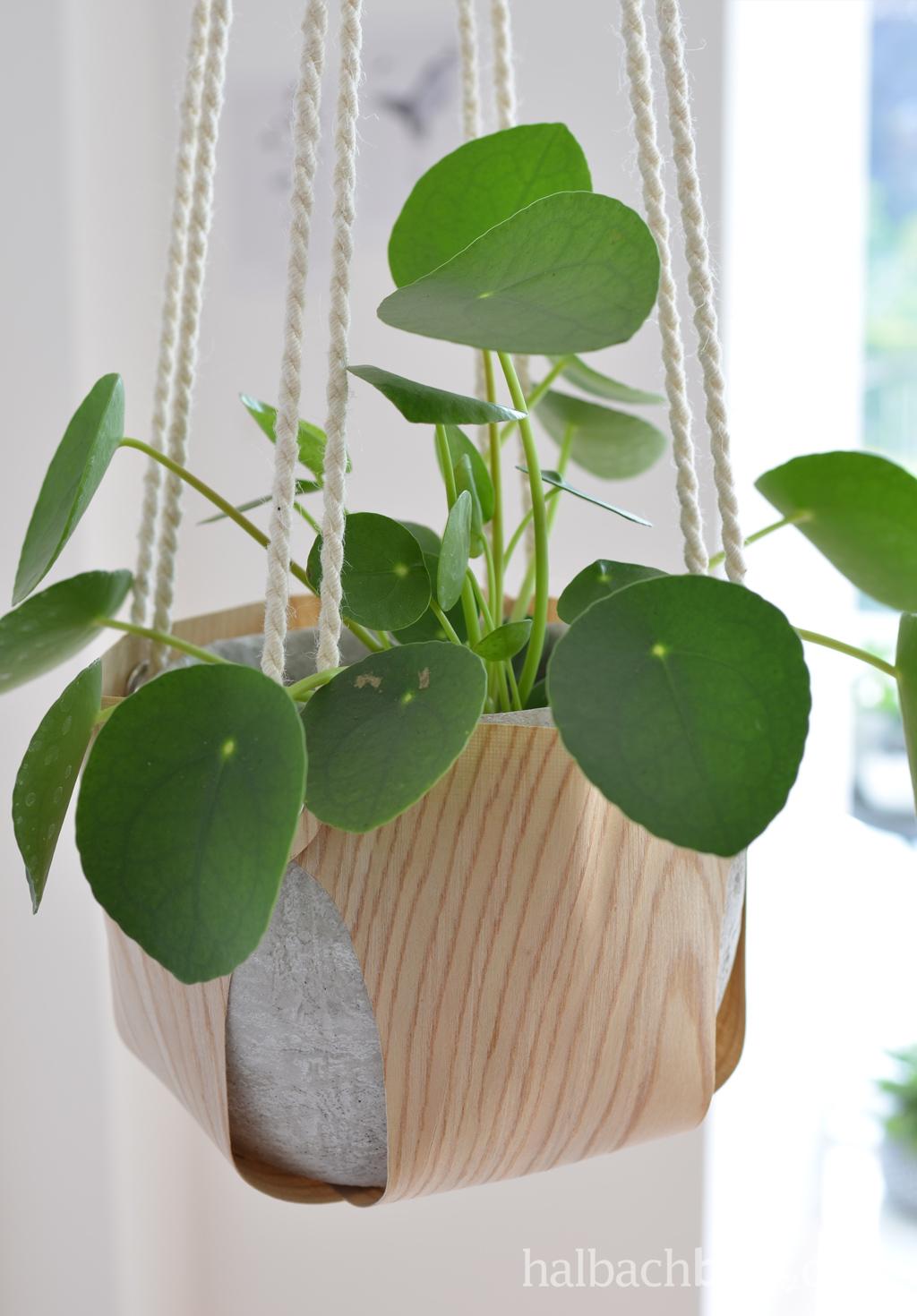 DIY-Tutorial halbachblog: Blumenampel aus Holzfurnier-Stoff nähen - graues Gefäß mit Pilea