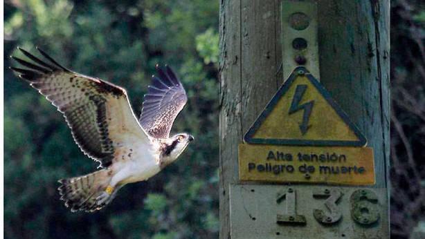 El ave era parte del programa para recuperar la especie.Foto: B. Center