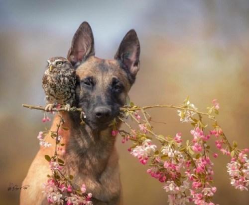 La amistad entre perro y buho