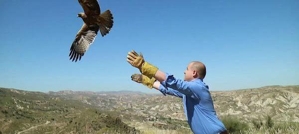 Aguila culebrera
