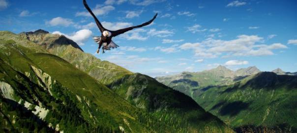 Curiosidades sobre las águilas