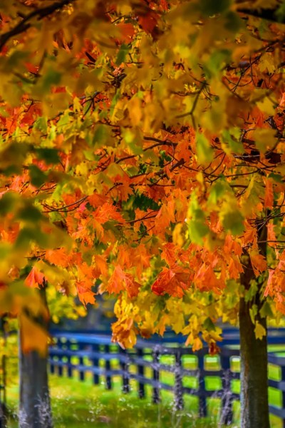 Every colour of autumn greets visitors and residents alike throughout Haldimand County