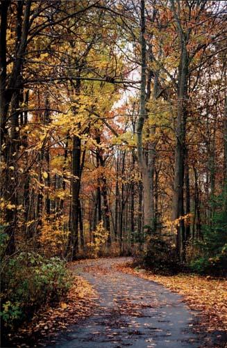 Walking underneath a canopy of fall foliage