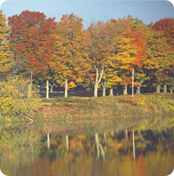 An embarkment of trees in shades of red, yellow gold in this fall picture