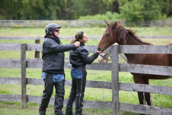 Motorcyclists feed horses