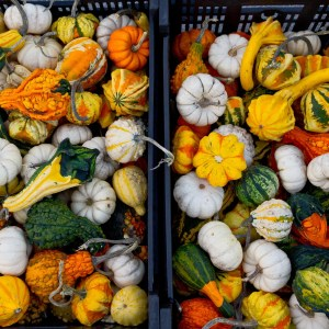 image of gourds at the farmers market
