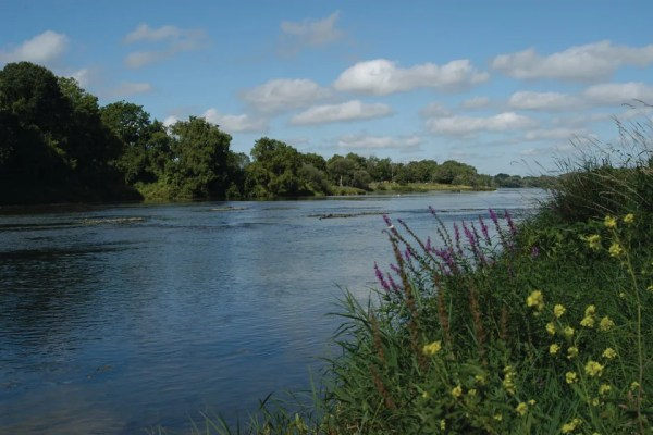 A view of the Grand River, wild flowers and foliage in summer