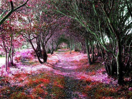 Tree Tunnel, Cantabria, Spain