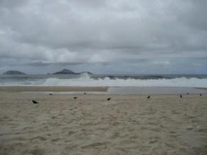 The Brazilian Beach Pigeon
