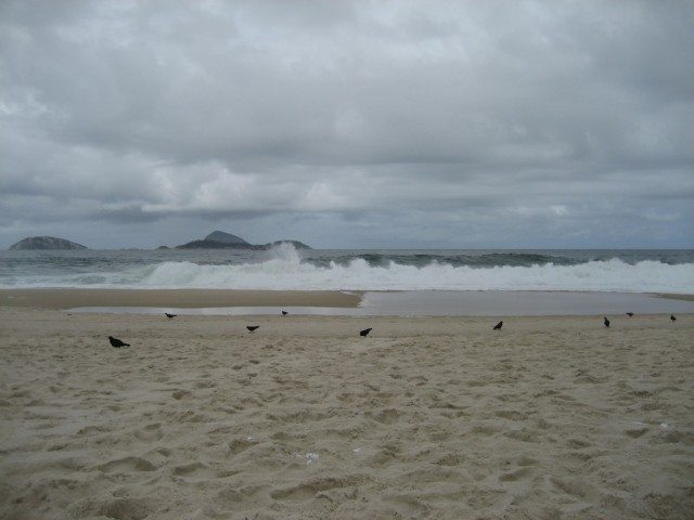 Beach pigeon in Ipanema