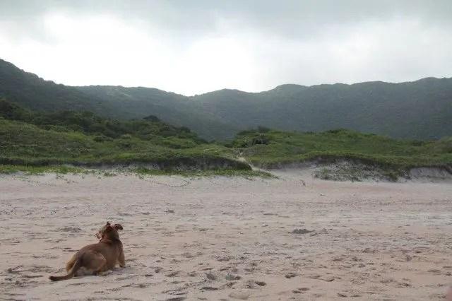 Florianópolis Beach Dog