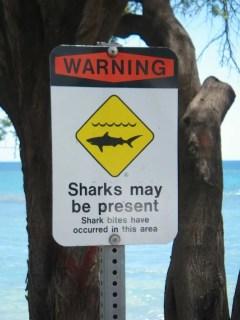 Warning - SHARKS