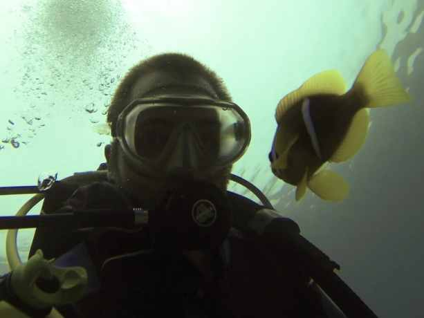 Red Sea Diving Clown Fish Stare Down