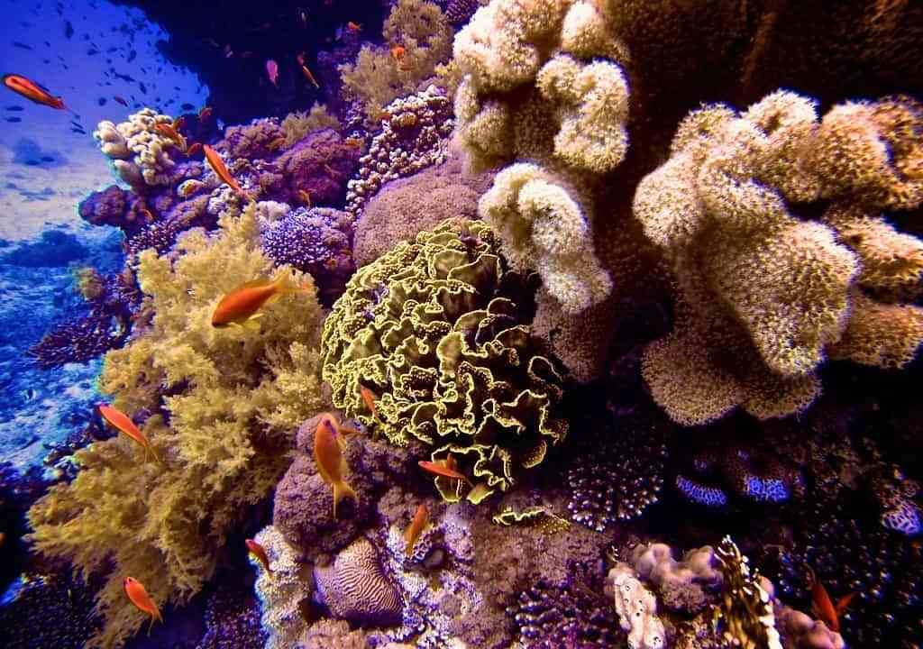 Red-Sea-Diving-Reef-Fish