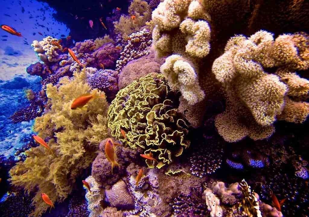 Red-Sea-Diving-Reef-Fish