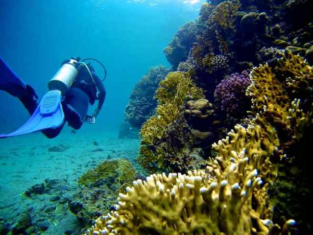 Red-Sea-Diving-Reef