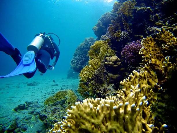 Red-Sea-Diving-Reef