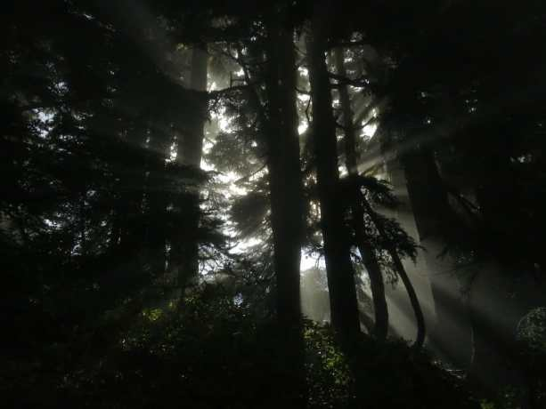 10 Washington Sunbeams