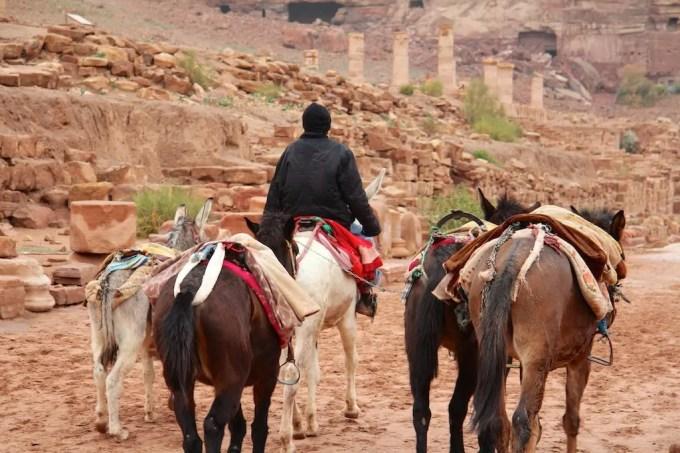 Donkey Wrangler Petra