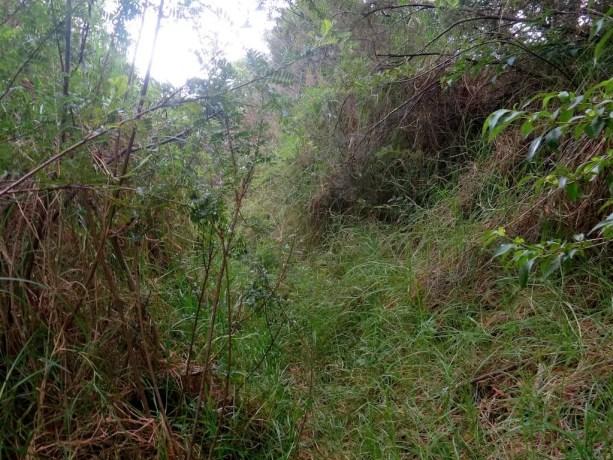 Kaupo Gap Trail Overgrown Bushes