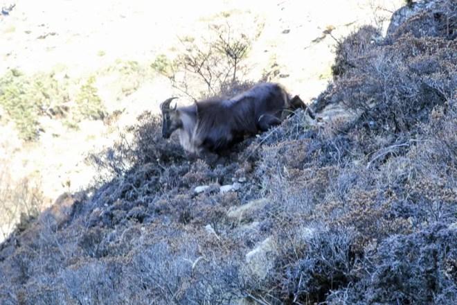 Ram In Himalaya