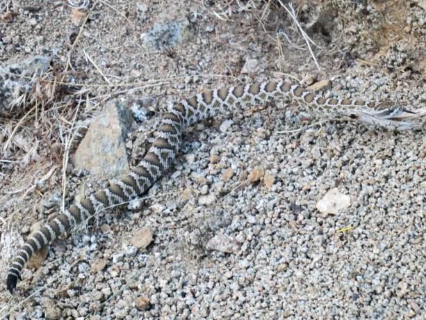 Pacific Crest Trail Death Rattle Snake Desert