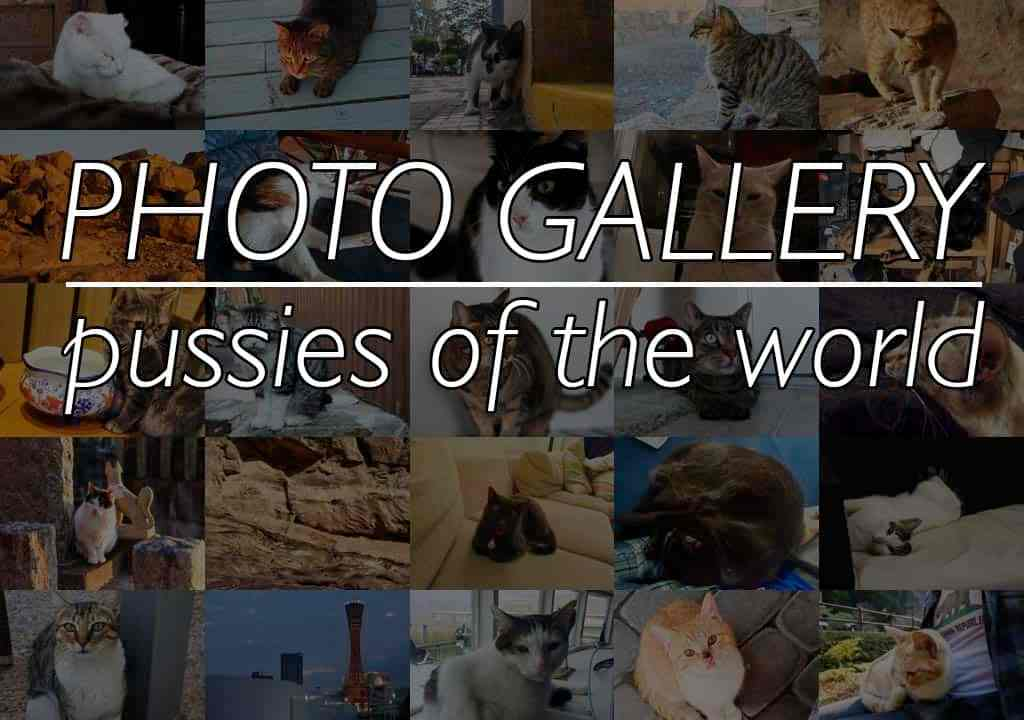 Cat Collage Featured Text