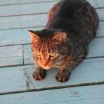 Fire Island Cat 2