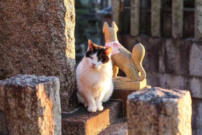 Kyoto Cat 1