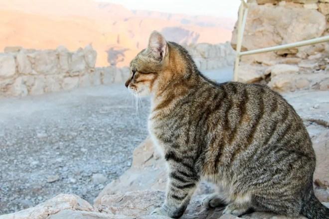 Masada Israel Cat 1