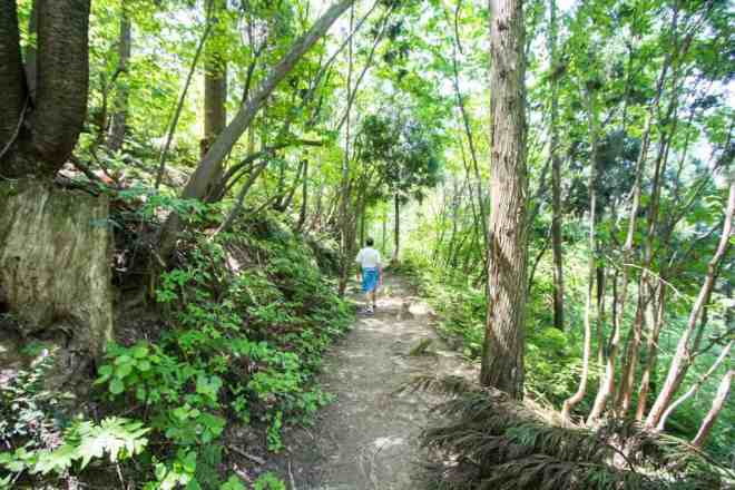 Mt Hino Trail