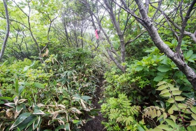 Mt Kanmuri Overgrown Trail