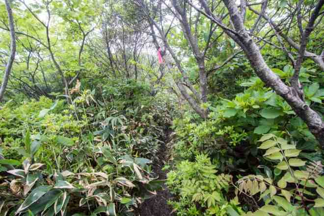 Mt Kanmuri Overgrown Trail