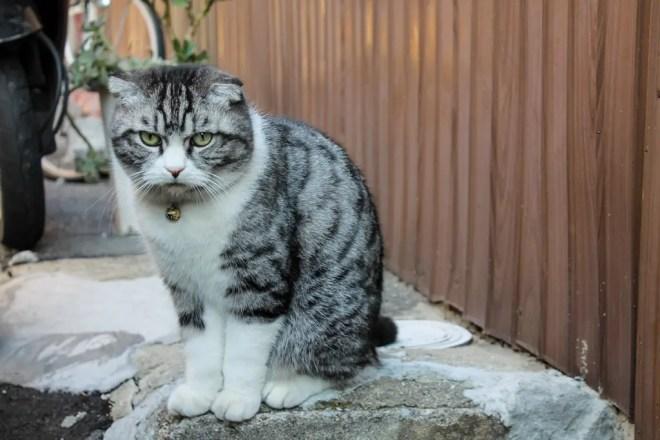 Osaka Cat 1