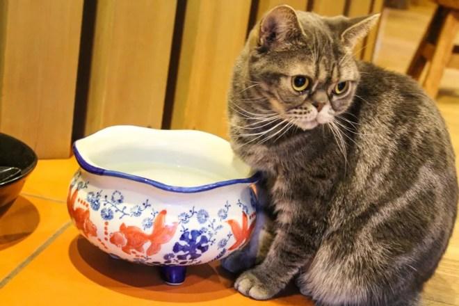 Osaka Cat 2