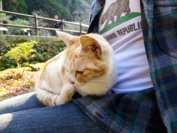 Takachiho Gorge Cat 2