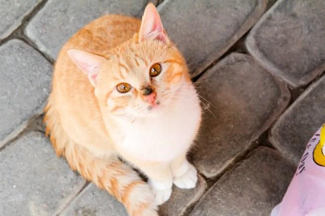 Tel-Aviv-Cat 1