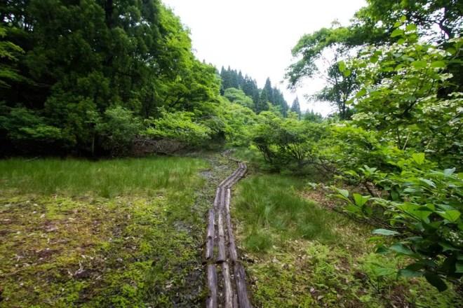 Mt Bunagatake Trail Logs Wet